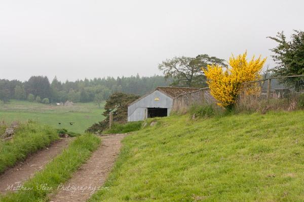 Farm-in-Scotland-8395